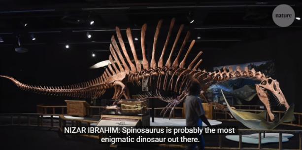 Spinosauro - Nature